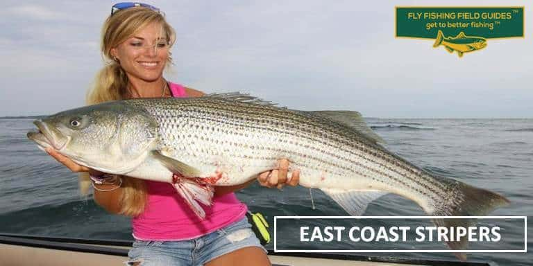 East Coast Stripers