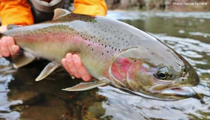 Safe Steelhead Fishing