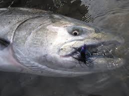 Best flies for salmon
